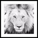 Lion Wall Art | Square | 90x90x4cm - Lost Design Society