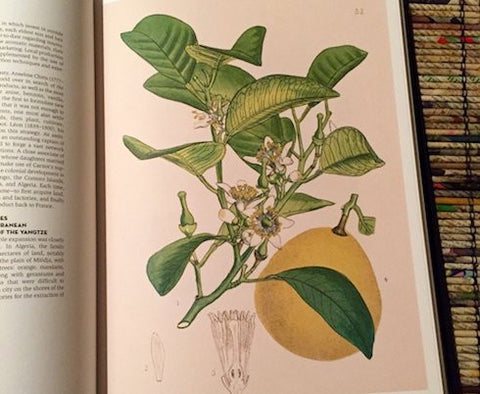 WHY BERGAMOT IS BRILLIANT AT BEDTIME