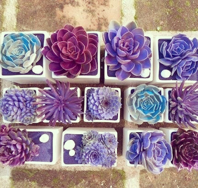 Say it with succulents by Kiss the Moon