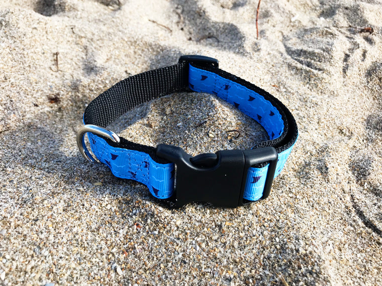 Blue Shark Fin Collar