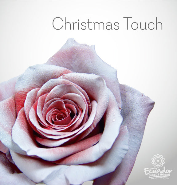 CHRISTMAS TOUCH - Bicolor Tinted Rose