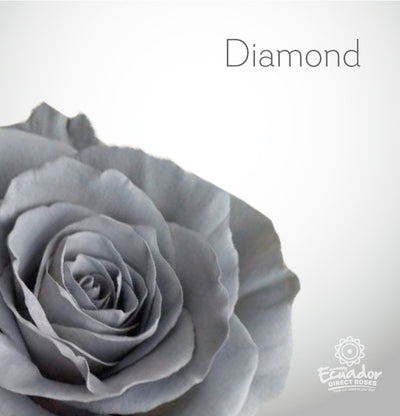 DIAMOND - Silver Grey Tinted Rose