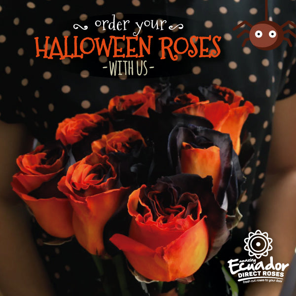 HALLOWEEN ROSE - Bicolor Orange and Black