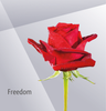 FREEDOM - Red Rose