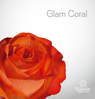 GLAM CORAL - Orange Tinted Rose