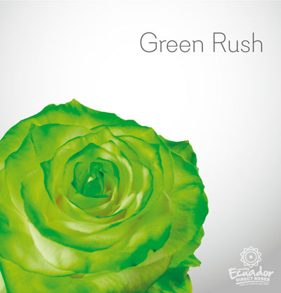 GREEN RUSH - Green Tinted Rose