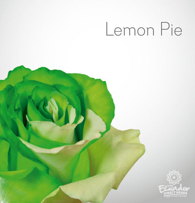 LEMON PIE - Bicolor Tinted Rose