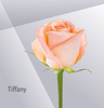 Tiffany - Peach Rose