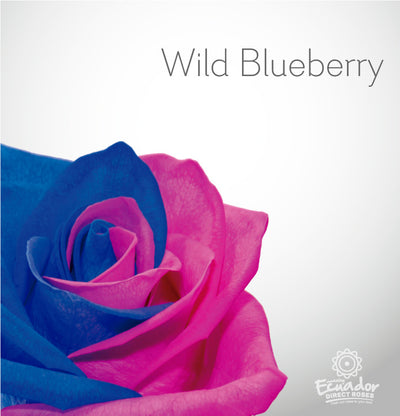 WILD BLUEBERRY - Bicolor Tinted Rose