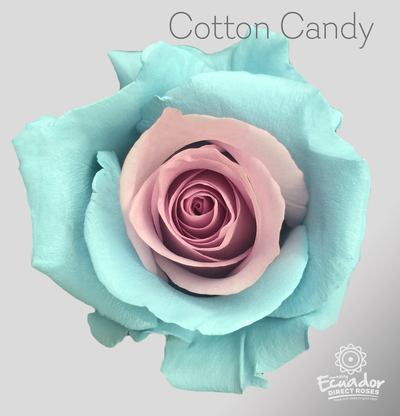 COTTON CANDY - Tinted Rose