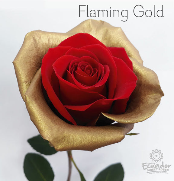 FLAMING GOLD - Bicolor Tinted Rose