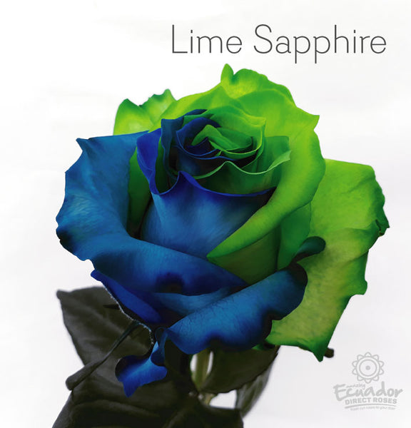 LIME SAPPHIRE -Bicolor Tinted Rose