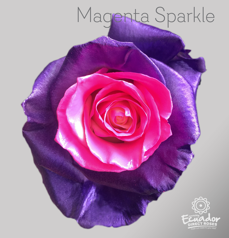 MAGENTA SPARKLE - Tinted Rose