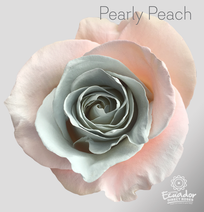PEARLY PEACH - Tinted Rose