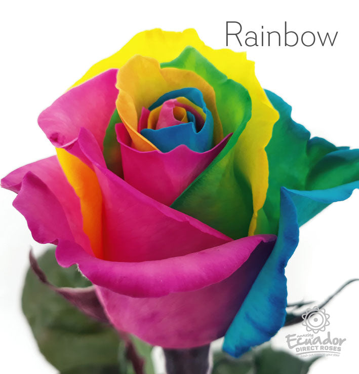 RAINBOW - Multicolor Tinted Rose