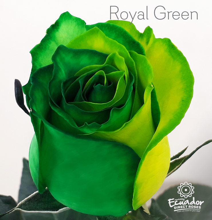 ROYAL GREEN -Bicolor Tinted Rose