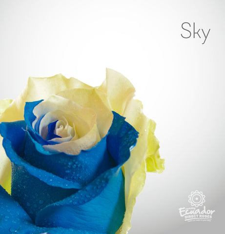 SKY - Bicolor Tinted Rose