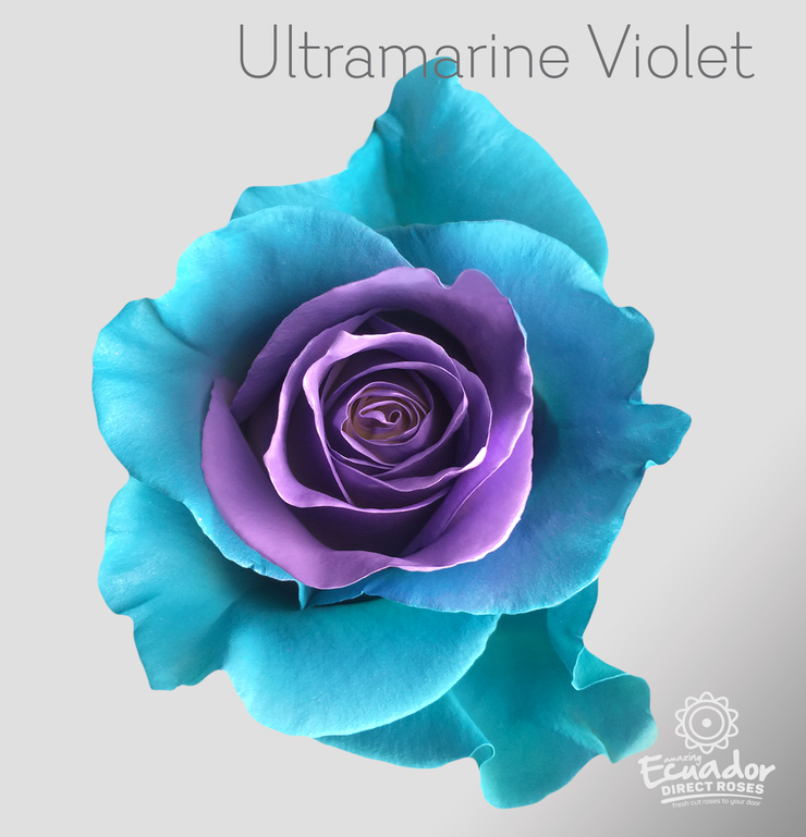 ULTRAMARINE VIOLET - Tinted Rose