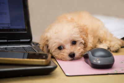 Ways to Create Pet-Friendly Workplaces