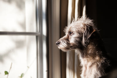 Tips for Tackling Pet Separation Anxiety