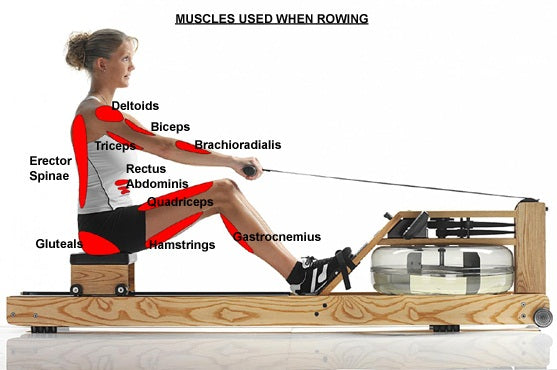 WaterRower Natural (WaterRower Natural Model In Stock) - Rower - WaterRower eepdx
