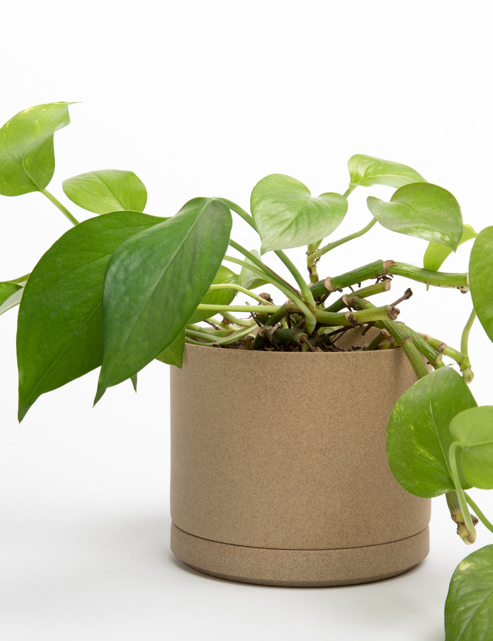 Hasami Planter - Natural - Autotype Design Goods