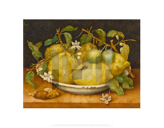 Still Life with Bowl of Citrons, Giovanna Garzoni