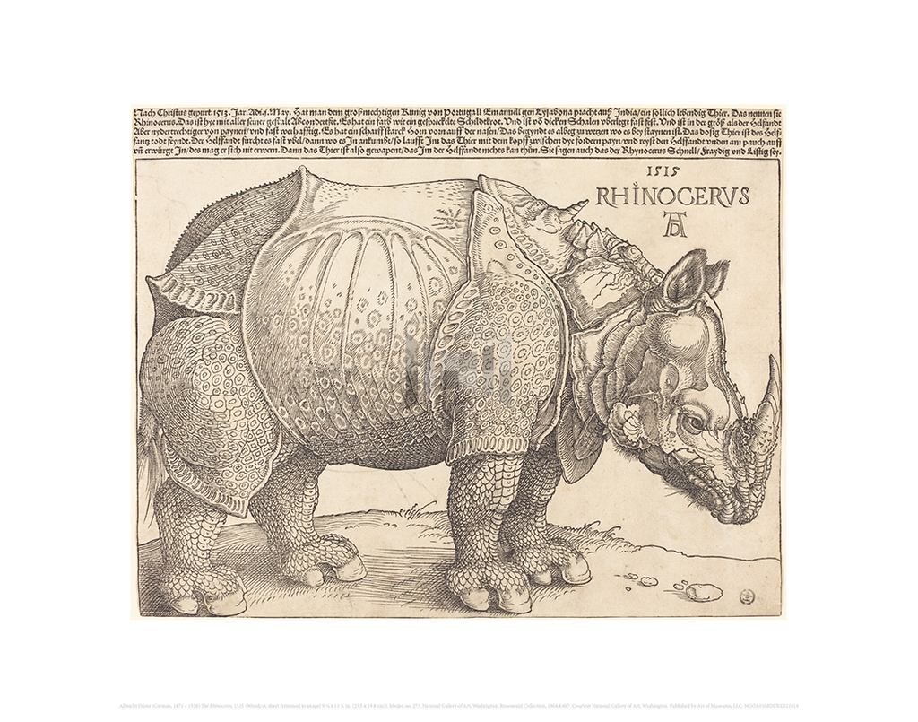 The Rhinoceros, Albrecht Durer