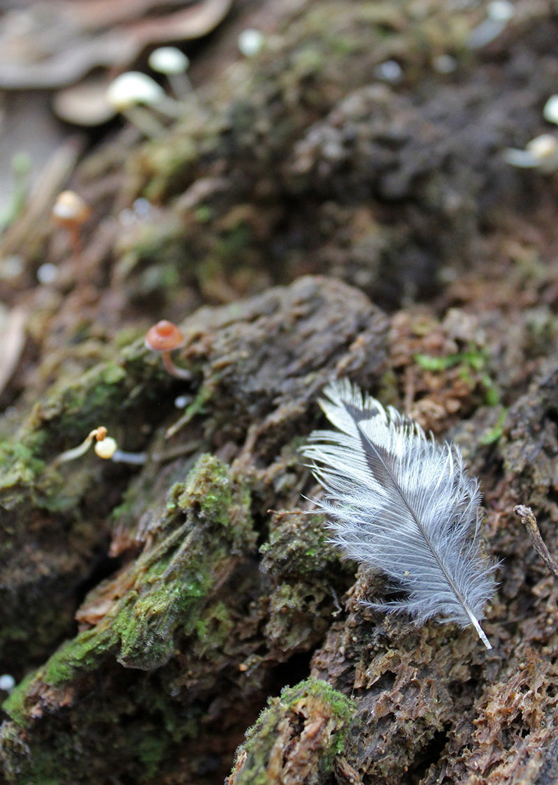 Feather and little mushrooms