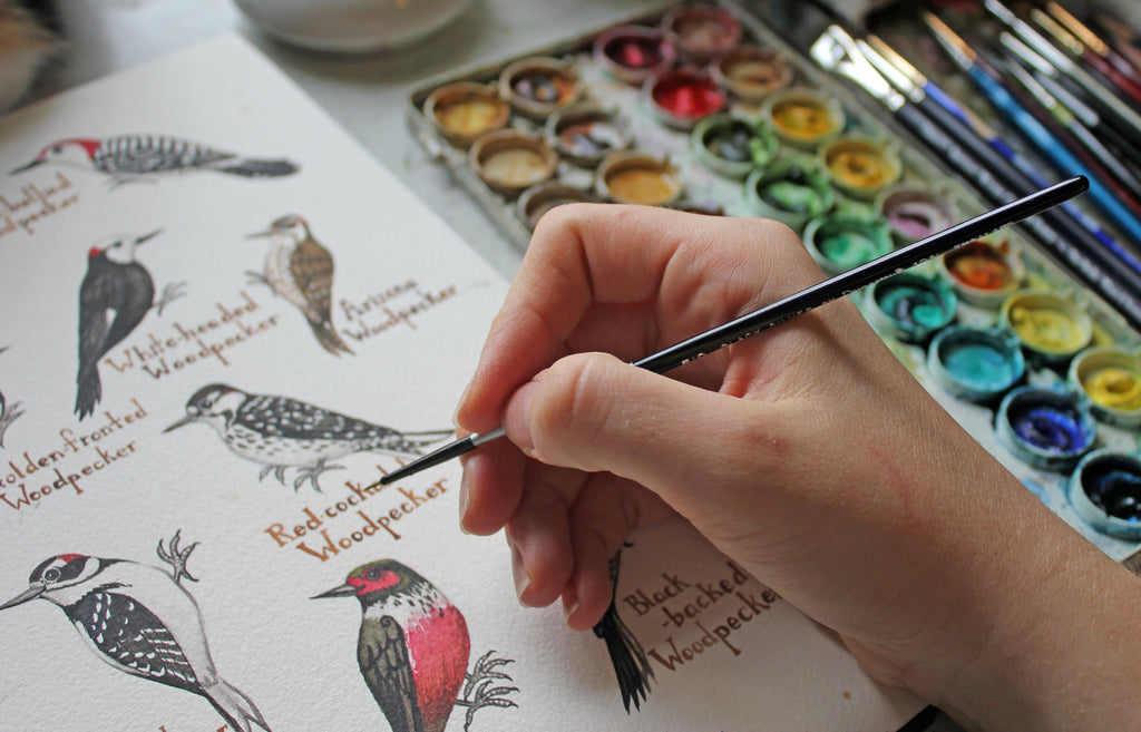 Watercolor woodpeckers painting in progress.