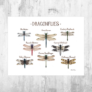 Dragonflies Field Guide Art Print