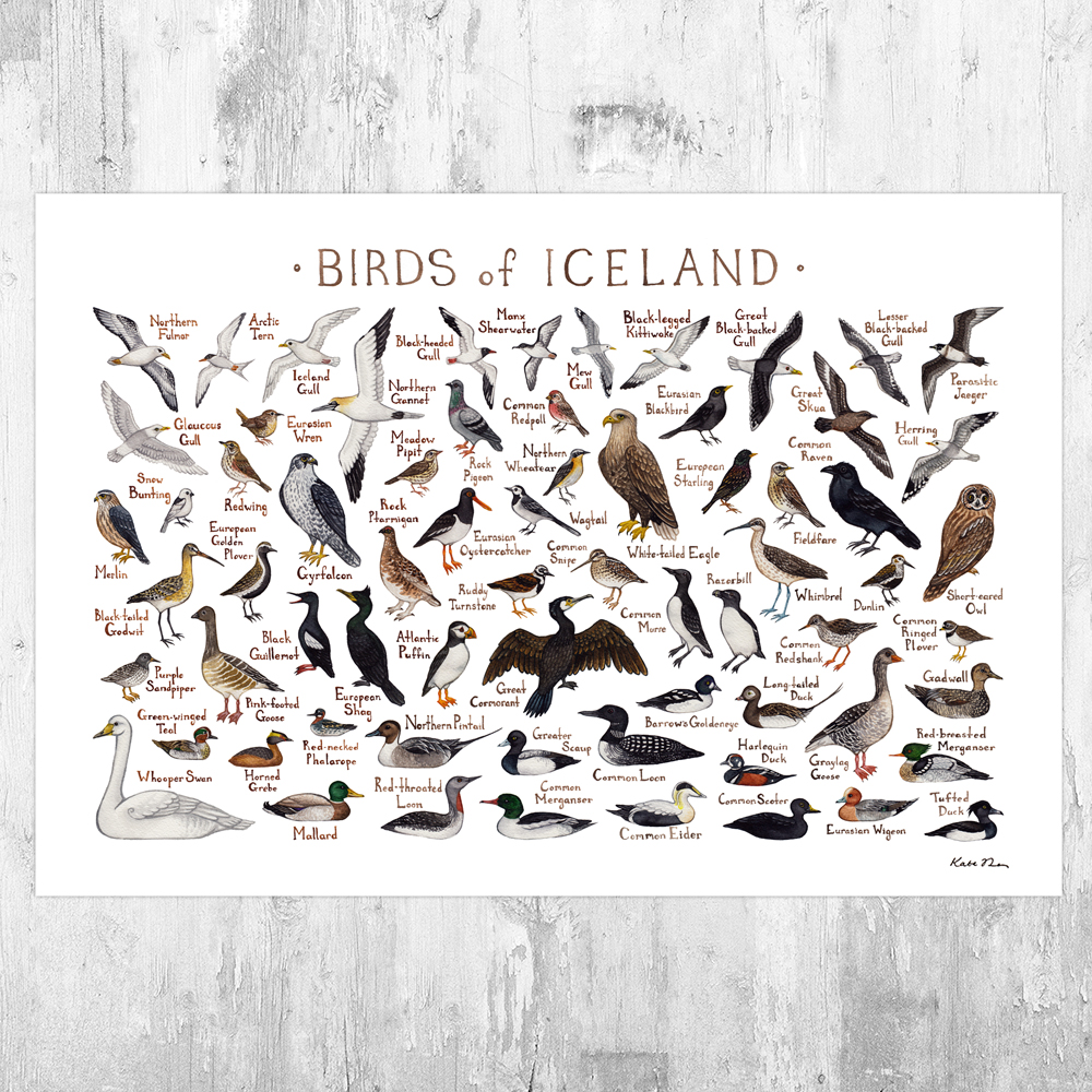 It is an image of Ambitious Printable Birding Checklist