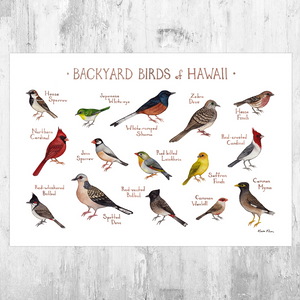 Hawaii Backyard Birds Field Guide Art Print