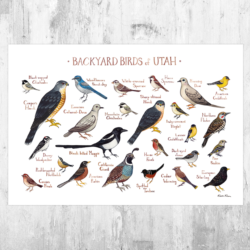 Utah Backyard Birds Field Guide Art Print