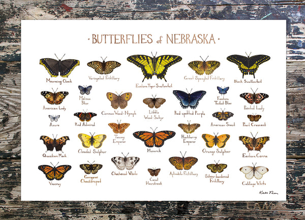 Wholesale Butterflies Field Guide Art Print: Nebraska