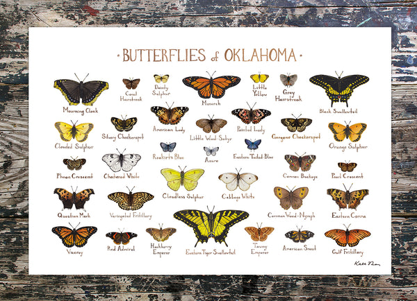 Wholesale Butterflies Field Guide Art Print: Oklahoma