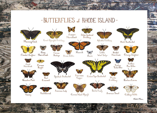 Wholesale Butterflies Field Guide Art Print: Rhode Island
