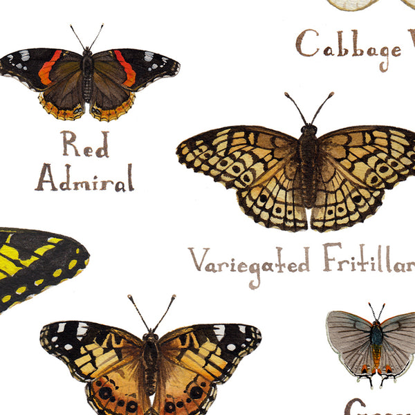 Wholesale Butterflies Field Guide Art Print: Arkansas
