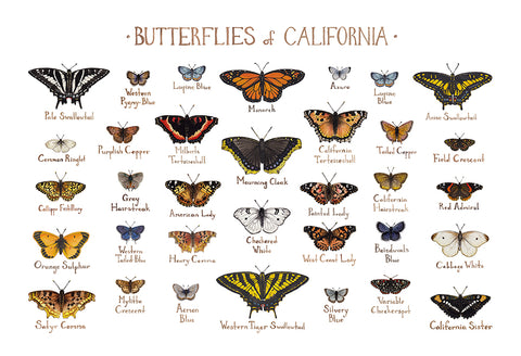 Wholesale Butterflies Field Guide Art Print: California