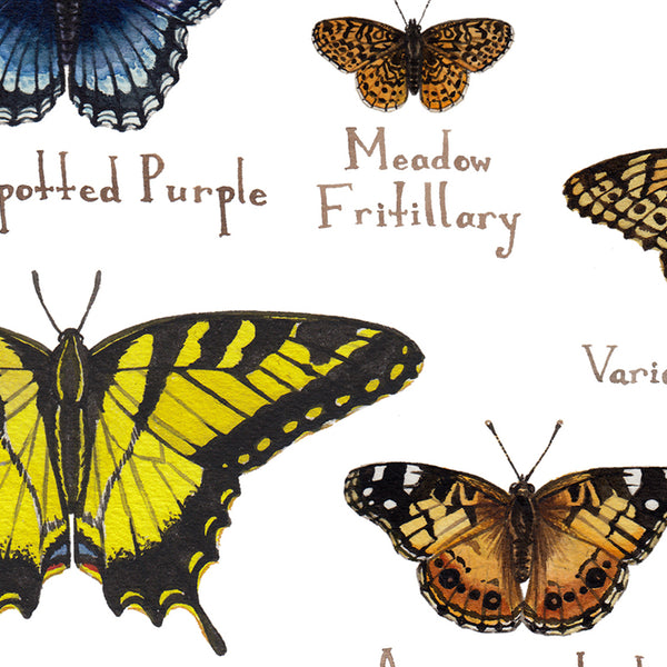 Wholesale Butterflies Field Guide Art Print: Delaware