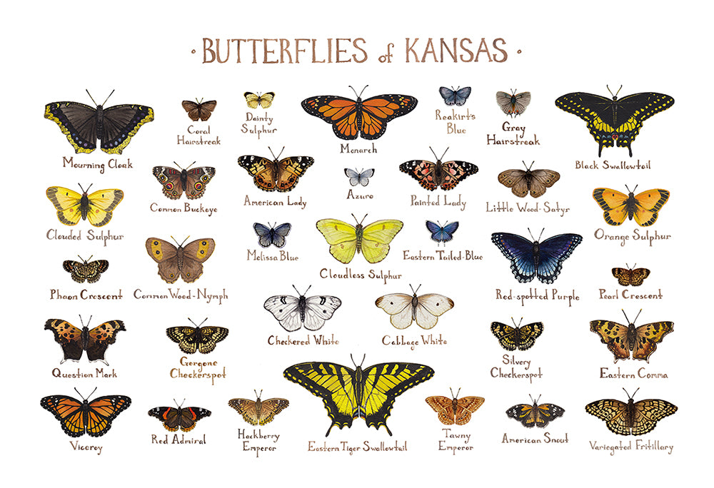 Wholesale Butterflies Field Guide Art Print: Kansas