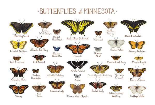 Wholesale Butterflies Field Guide Art Print: Minnesota