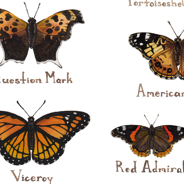 Wholesale Butterflies Field Guide Art Print: Michigan