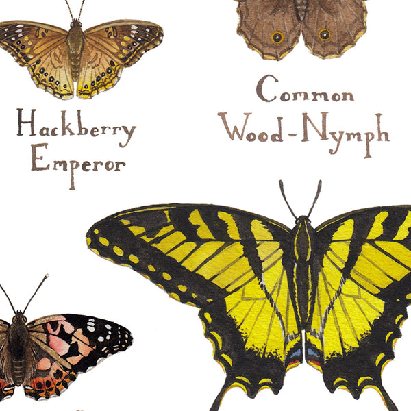 Wholesale Butterflies Field Guide Art Print: South Carolina