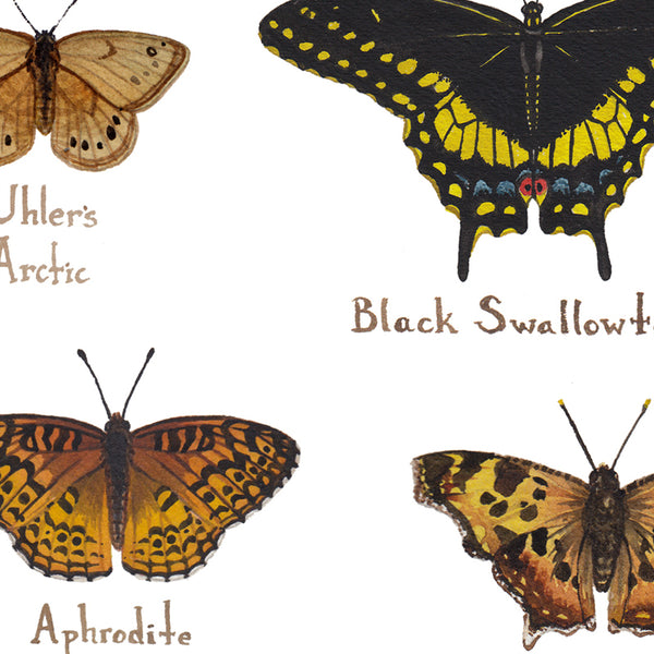 Wholesale Butterflies Field Guide Art Print: South Dakota