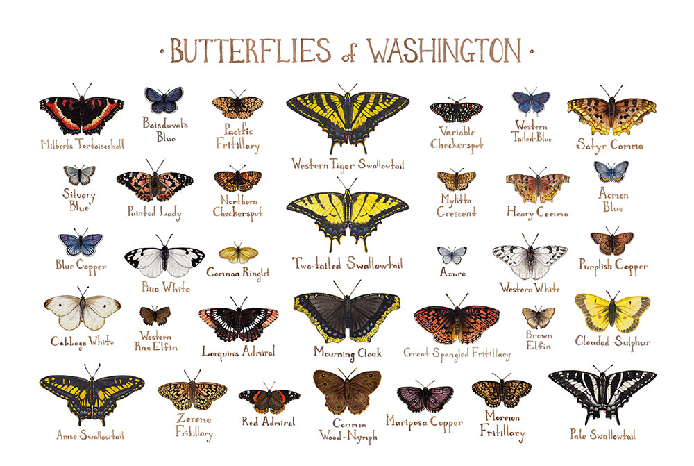 Wholesale Butterflies Field Guide Art Print: Washington