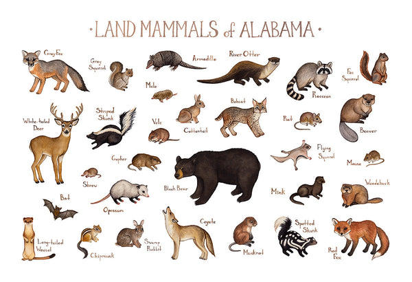 Land Mammals of Alabama Field Guide Art Print