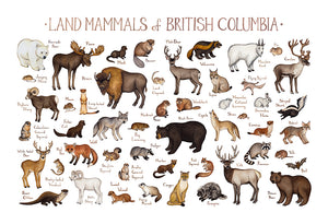 Land Mammals of British Columbia Print