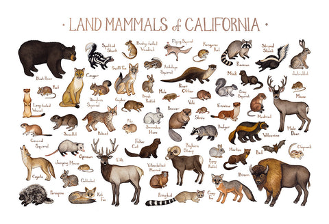 California Land Mammals Field Guide Art Print