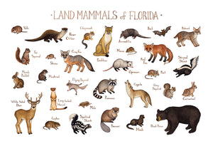 Florida Land Mammals Field Guide Art Print